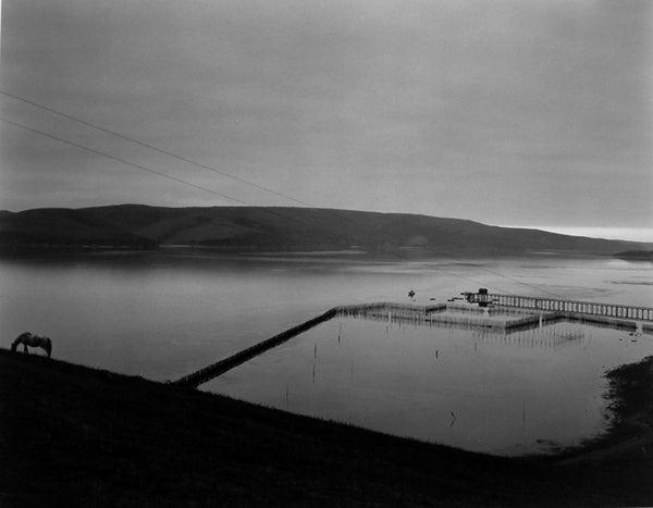 Tomales Bay, 1937