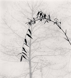 Bamboo and Tree, Qingkou Village, Yunnan, China, 2013