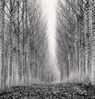 Corridor of Leaves, Guastalla, Emilia Romagna