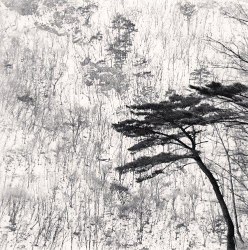 Michael Kenna Black and White Photograph - Mountain Walk, Pyeongchang, South Korea, 2012