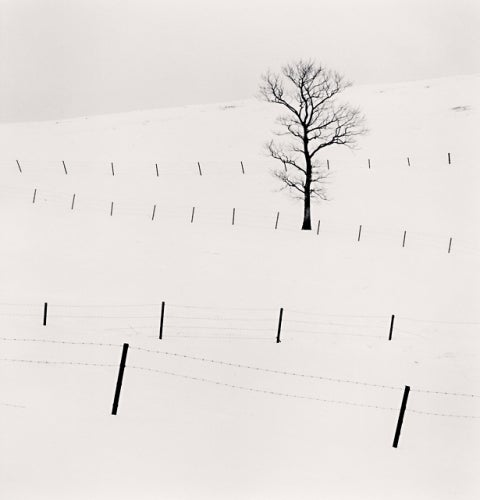 Tree and Twenty Eight Posts, Teshikaga, Hokkaido, Japan, 2013