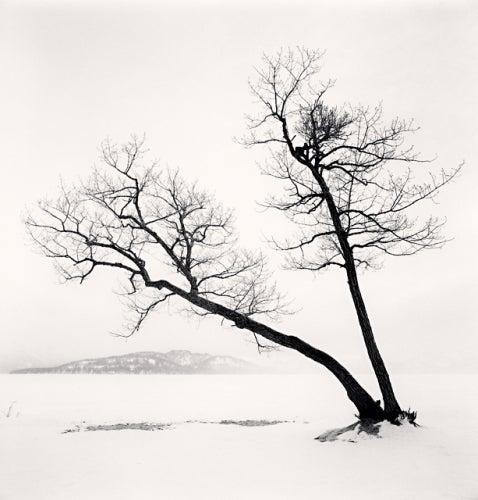 Two Leaning Trees, Kussharo Lake, Hokkaido, Japan, 2013