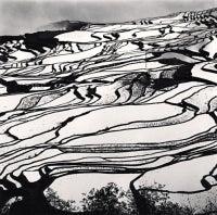 Yuanyang, Study 2, Yunnan, China, 2013