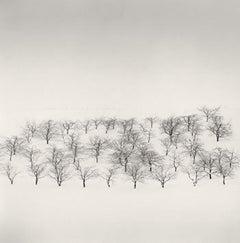 Sixty Trees, Nakafurano, Hokkaido, Japan, 2004