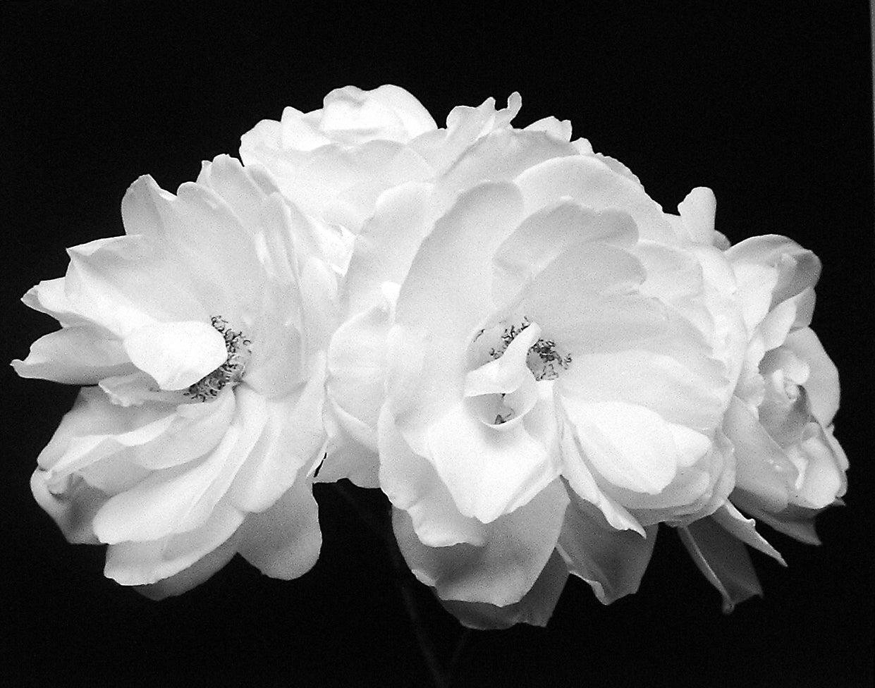 Four Roses, Carmel, CA