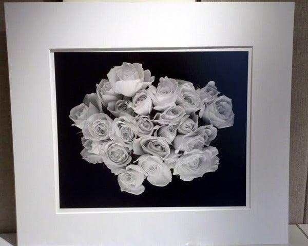Large Rose Buds, Carmel, CA 2001 3