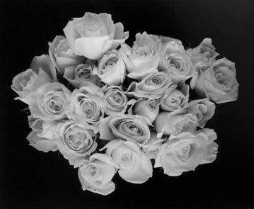Large Rose Buds, Carmel, CA 2001