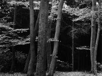 Beech Forest, Netherlands
