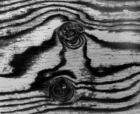 Abstract Birch Bark