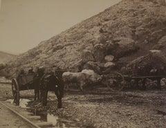 Cattle and Carts, Leaving Balaklava