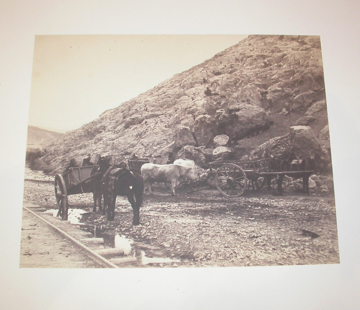 Cattle and Carts, Leaving Balaklava - Photograph by Roger Fenton