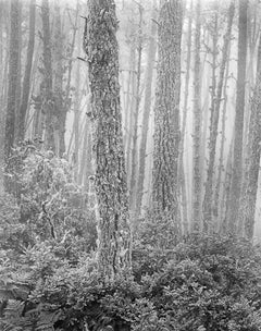 Del Monte Forest 1956
