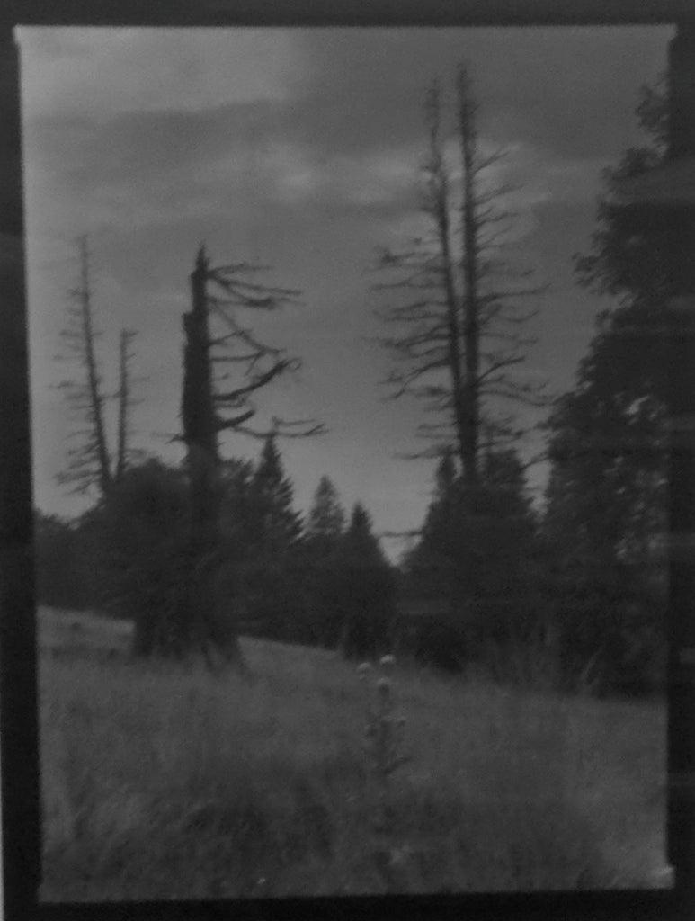 Josef sudek black and white photograph broken limbs and flowers