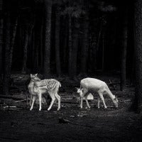 In a Forest Glade