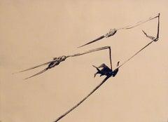 Storks Bill, Storchschnabel