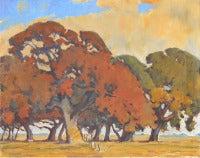 Oak Trees Near Stockton