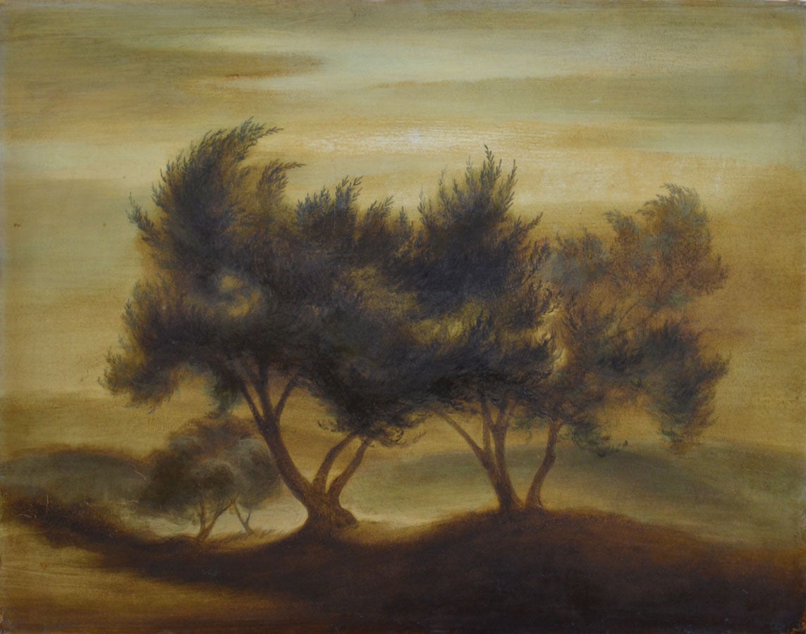 Robert McIntosh Landscape Painting - Olive Trees