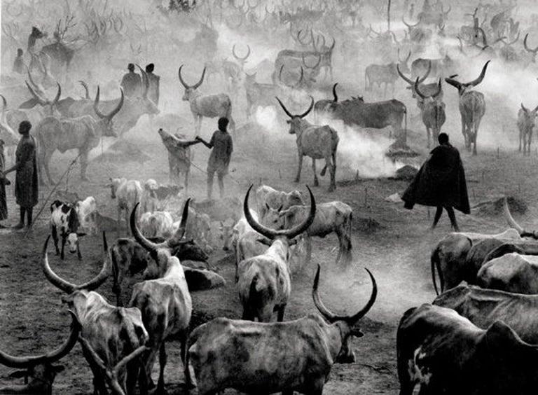 Dinka Cattle Camp, Southern Sudan - Photograph by Sebastião Salgado