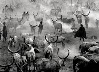 Dinka Cattle Camp, Southern Sudan