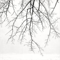 Hanging Branches with Snow