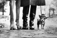 New York (Great Dane Legs, Boots and Chihuahua)