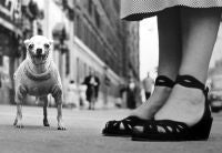 New York (Dog and Sandals)