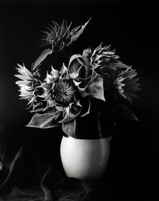 Sunflower Vase, Millerton, New York