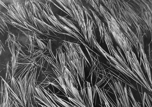 Grass and Water, Mt. Baker, Washington