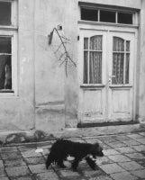 Belogradchik, Bulgaria (Dog on Paved Street, Cat in Window)