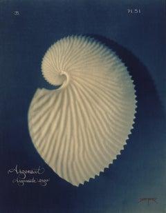 Argonaut  2005