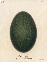 Emu (Egg) 2003