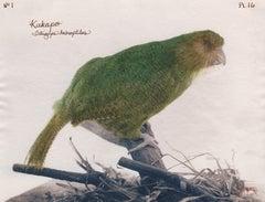 Kakapo 2003