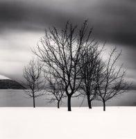 Five Trees, Toya Lake, Hokkaido, Japan