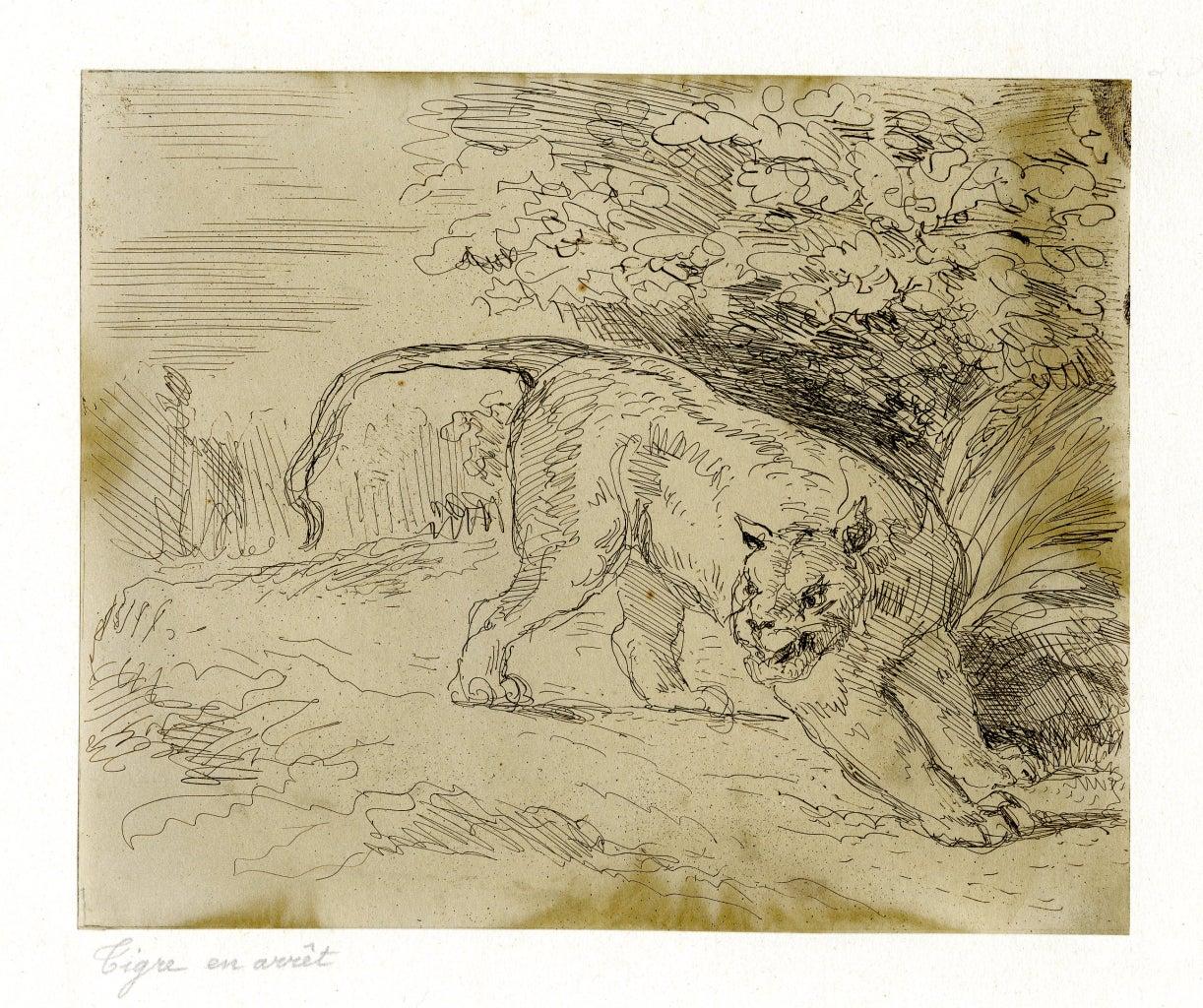Tigre en arret