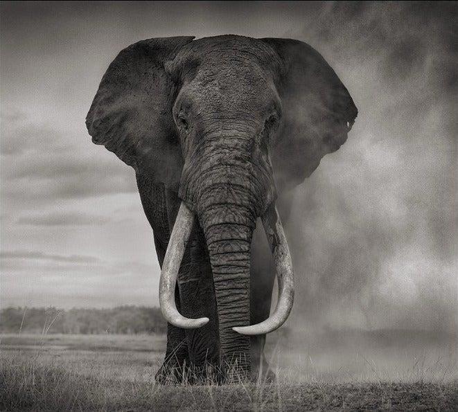 Nick Brandt Portrait Of Elephant In Dust Amboseli End