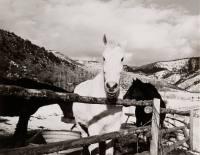 Horses at Powers Ranch, Colorado