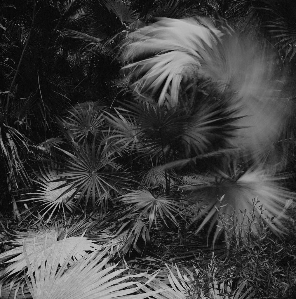 Heather Boose Weiss Black and White Photograph - El Habitat de Sian Ka'an