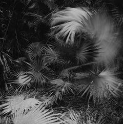 El Habitat de Sian Ka'an, black and white landscape photograph