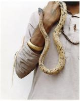 Horse Eater Snaker