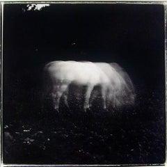 White Horse in Moonlight