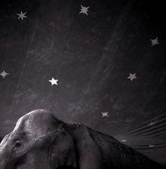 Elephant and Stars