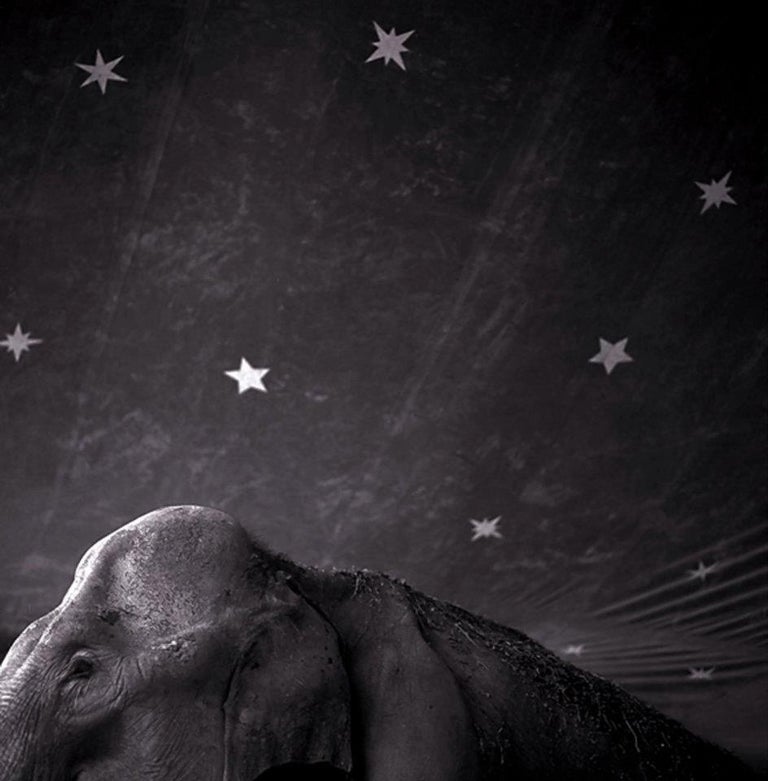 Keith Carter b.1948 Black and White Photograph - Elephant and Stars