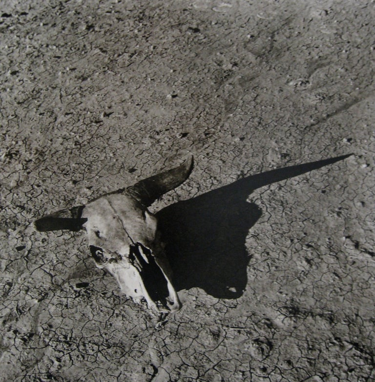 Arthur Rothstein Still-Life Photograph - The Bleached Skull of a Steer on the Sun-Baked Earth of South Dakota Badlands
