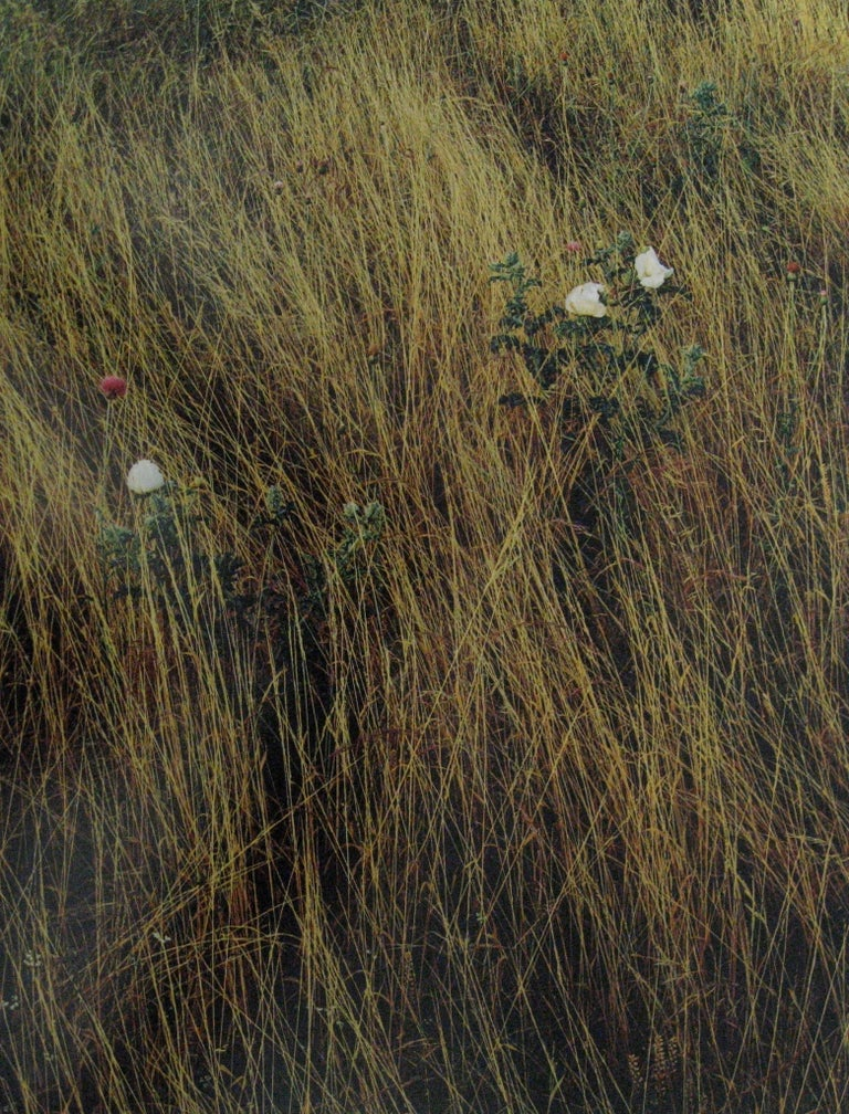 Prickly Poppy, Thistle and Field Grass, Central Texas - Photograph by Jim Bones