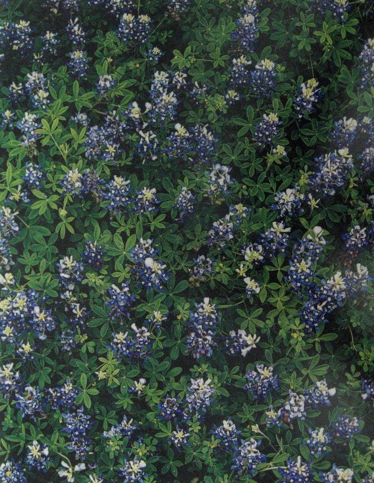 Jim Bones Color Photograph - Bluebonnets, Spicewood Springs, Texas