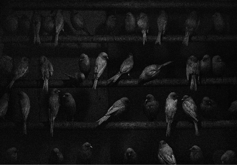 George Krause Black and White Photograph - Birds, Mexico
