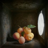 Apricots (Contemporary Still Life Study in Light Box with Diffused Light)