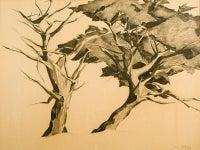 Monterey Trees