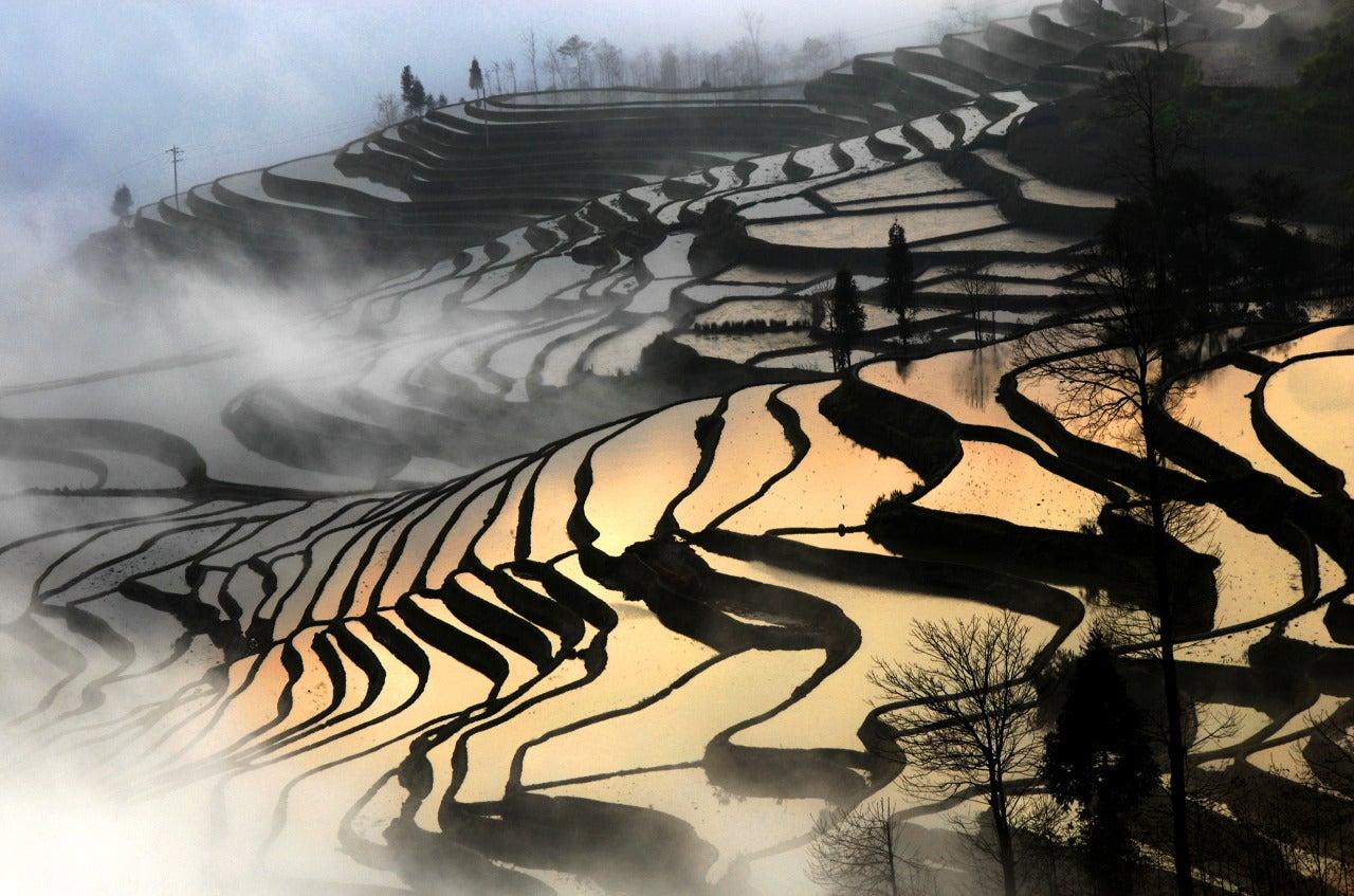 Peter Leung Rice Terrace Yuanyang Yunnan Province