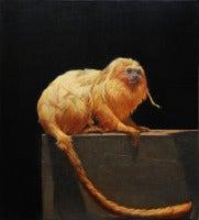 Endangered Golden Lion Tamarin